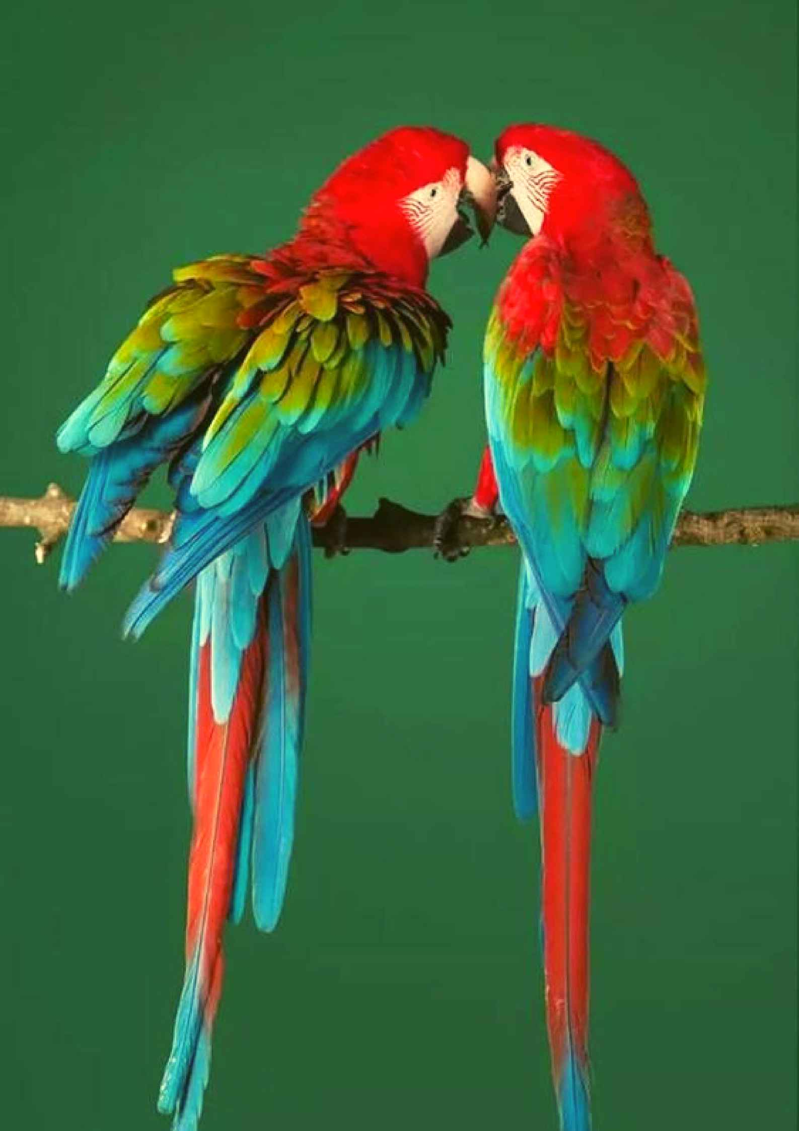Love Birds Hd Wallpapers Posted By Zoey Sellers