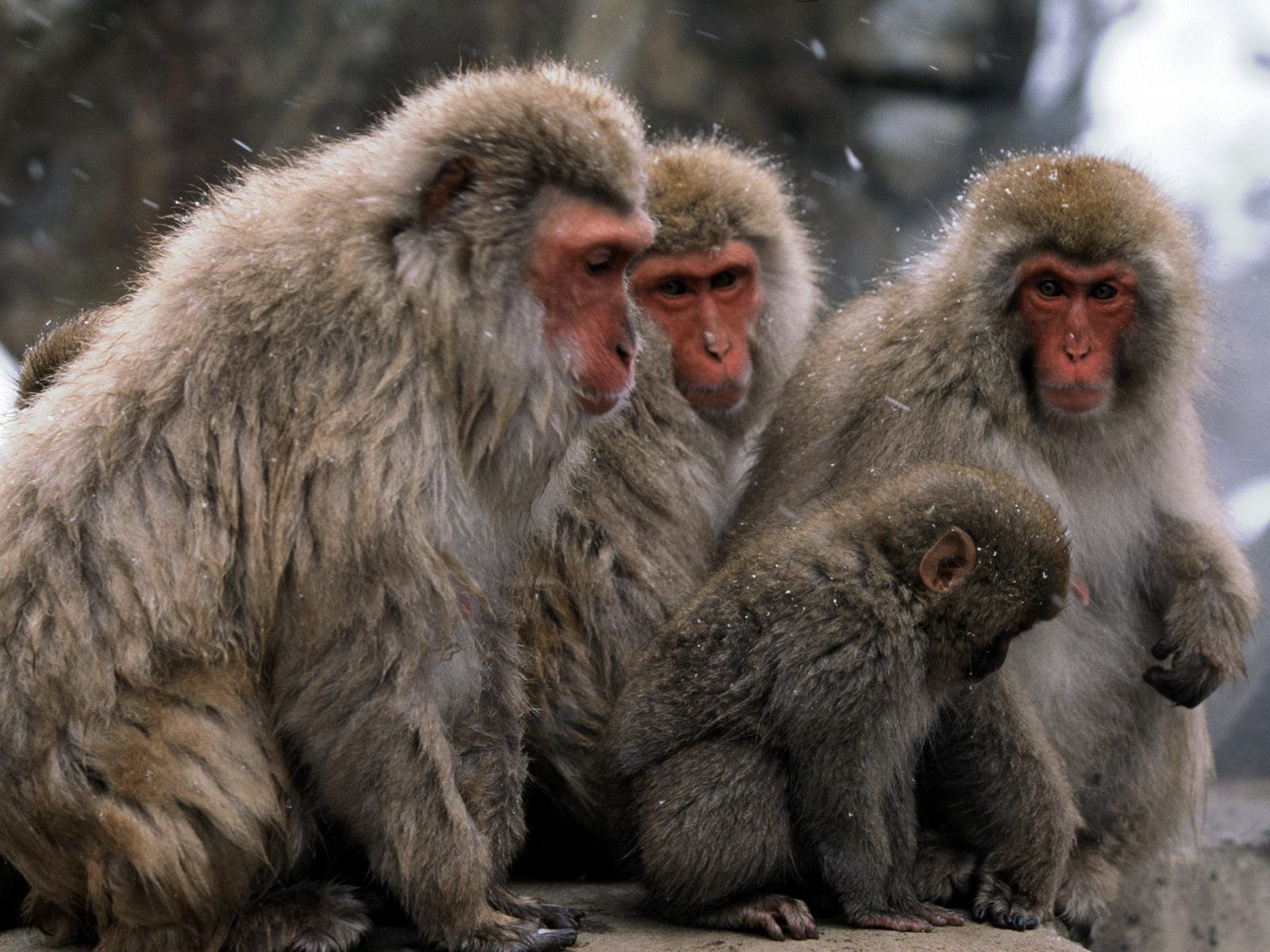Monkey Images Download Posted By Ryan Mercado Images, Photos, Reviews