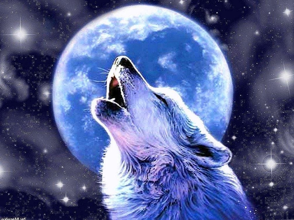 Moon And Wolf Wallpaper Posted By Michelle Peltier