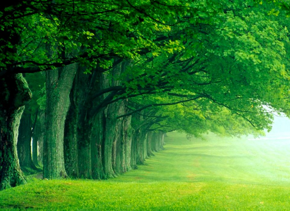 3D Nature Wallpaper 2016 Hd HD Wallpapers Gallery