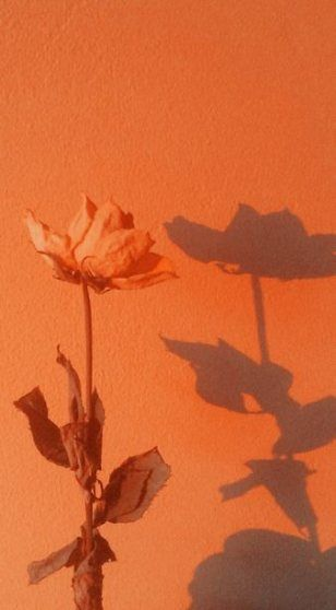 Wall Paper Aesthetic Iphone Orange 50 Ideas For 2019 wall