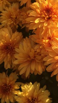 orange wallpapers Tumblr