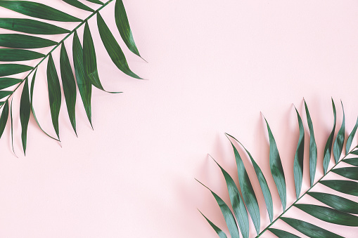 Palm Leaves Desktop Wallpaper Posted By Sarah Simpson Standard 4:3 5:4 3:2 fullscreen uxga xga svga qsxga sxga dvga hvga hqvga. palm leaves desktop wallpaper posted by sarah simpson