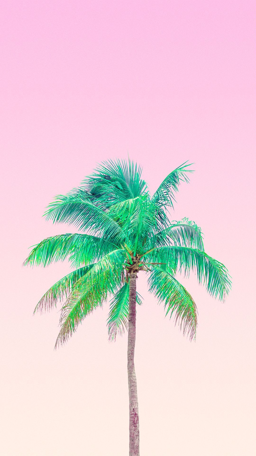 Aesthetic Palm Tree Wallpaper Pink Allwallpaper Find the best aesthetic wallpapers on getwallpapers. aesthetic palm tree wallpaper pink