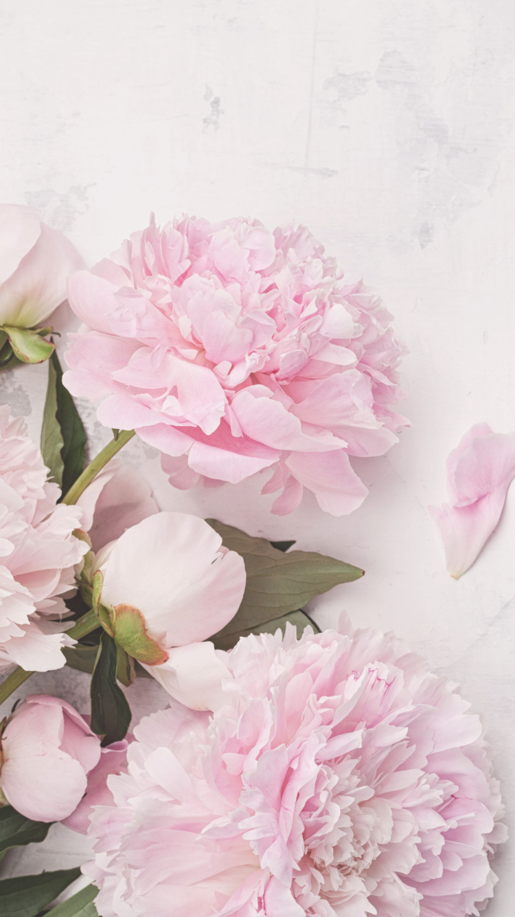 Peonies Wallpaper Iphone Posted By Ethan Simpson