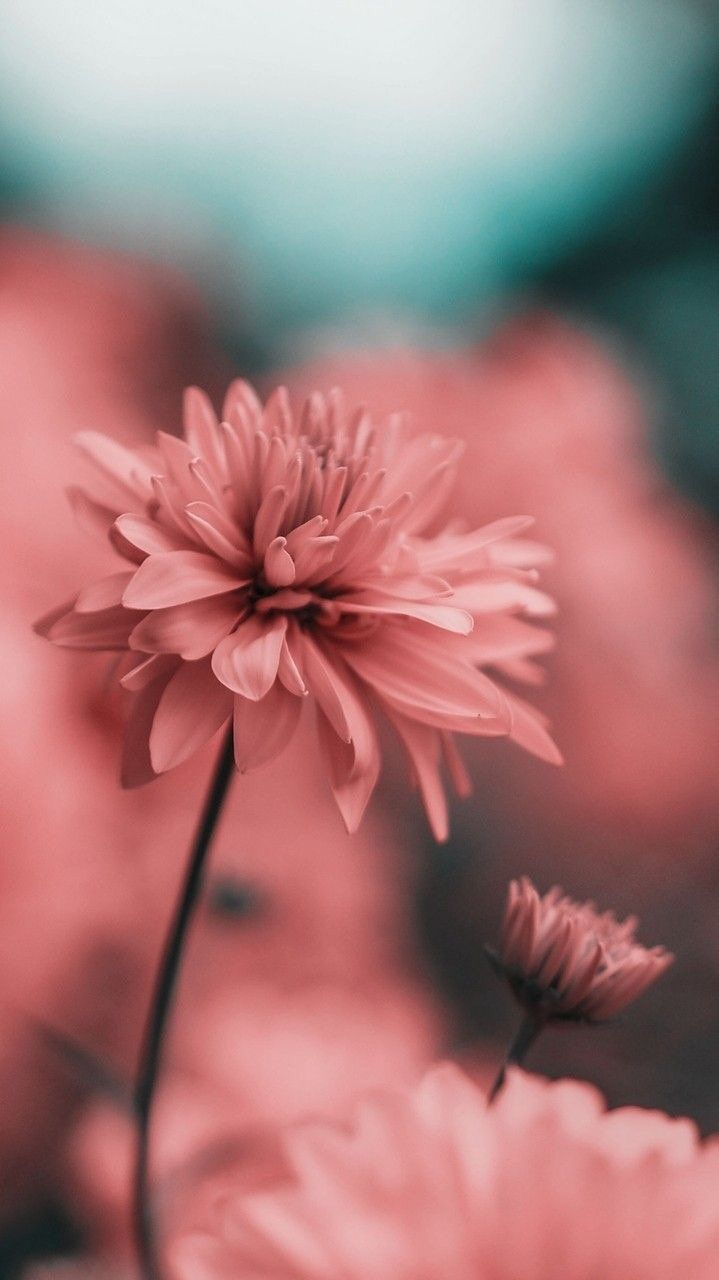 Pink Wallpapers For Android Posted By John Simpson
