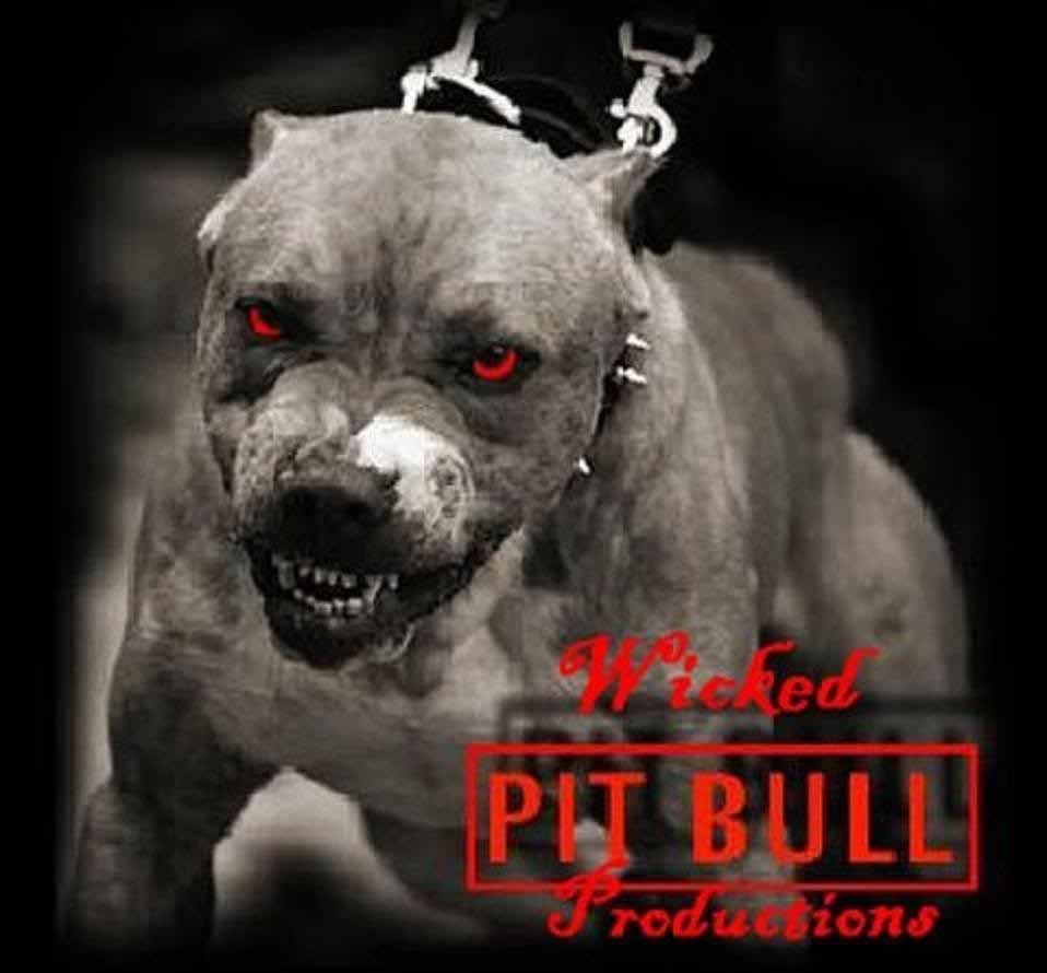 Pitbull Dogs Iphone Wallpapers Posted By Michelle Tremblay