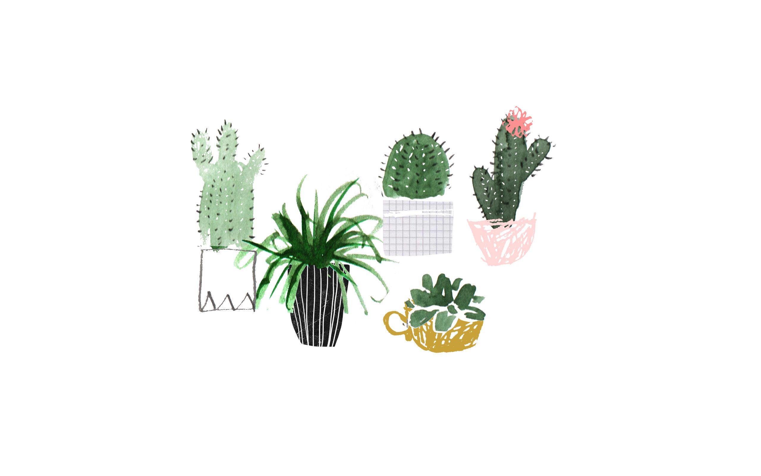 Plants Desktop Wallpaper Posted By Samantha Walker