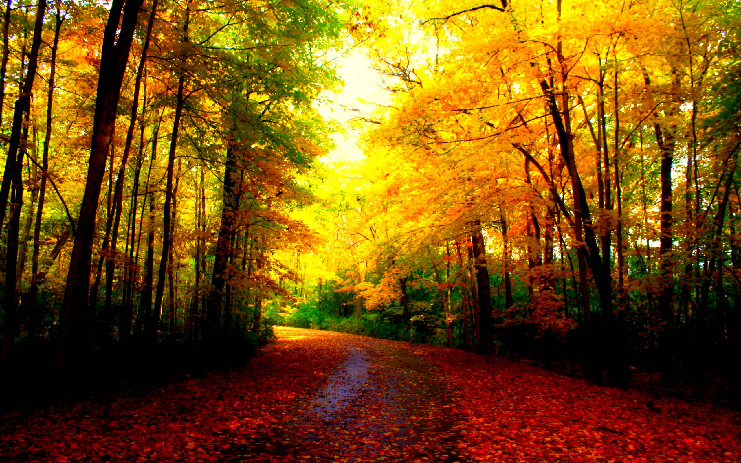 Pretty Autumn Wallpaper Posted By Christopher Johnson
