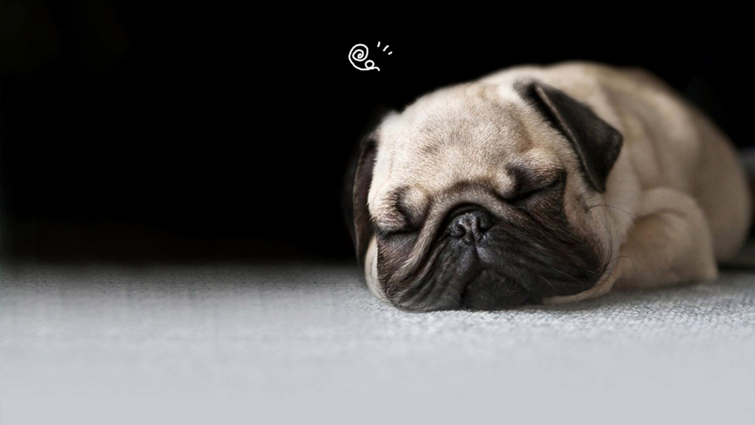 Pug Desktop Background Posted By Michelle Sellers