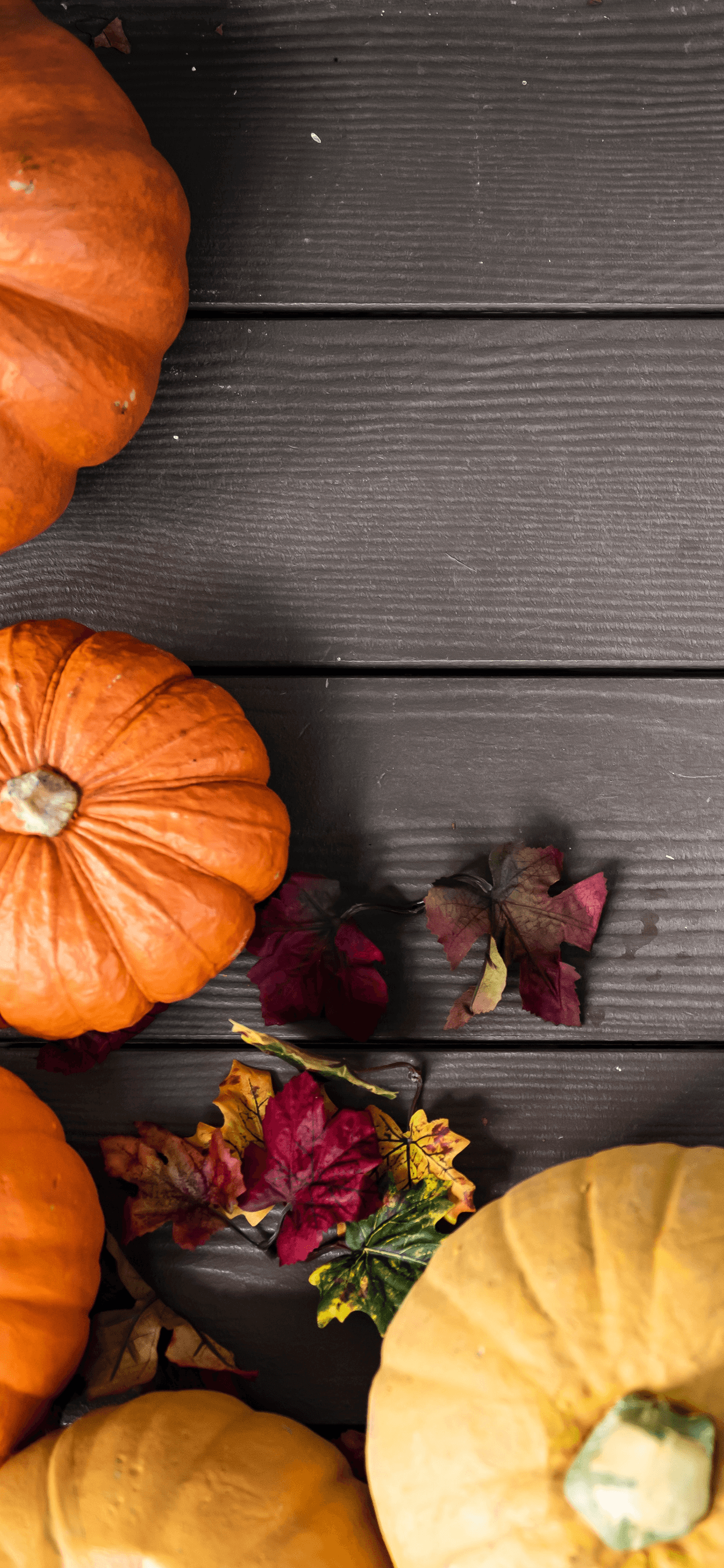 Pumpkin Phone Wallpaper Posted By Christopher Walker