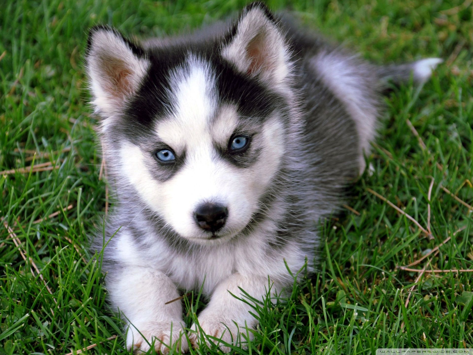 Puppy Wallpaper Hd Posted By Zoey Simpson