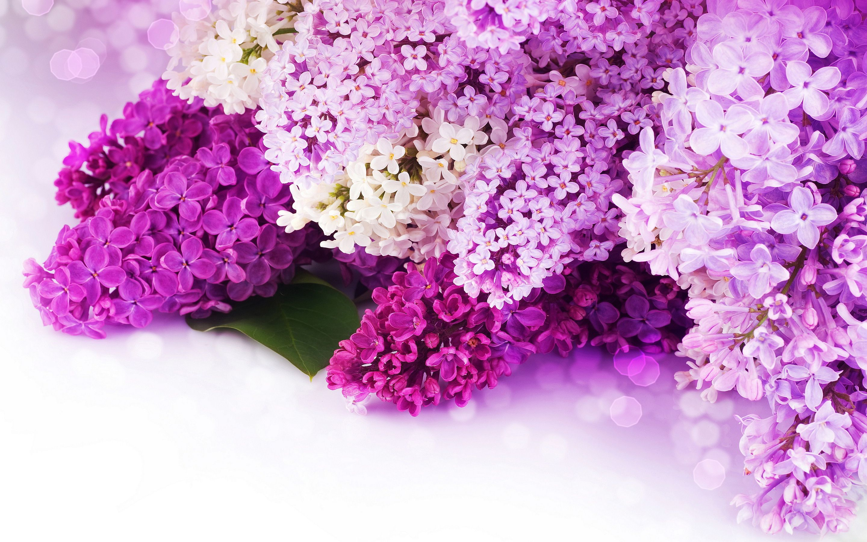 Purple Flower Desktop Background Posted By Sarah Simpson