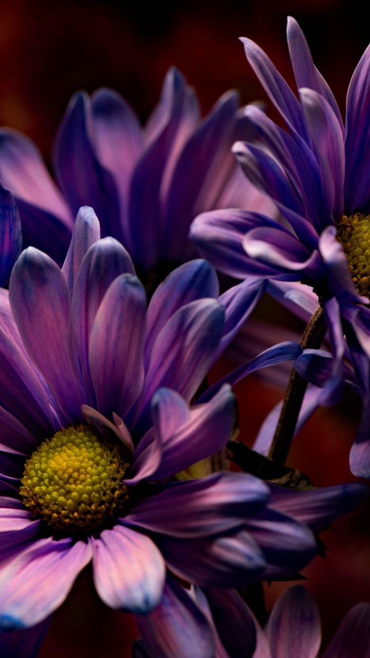 Purple Flower Iphone Wallpaper Posted By Sarah Thompson