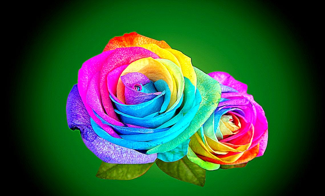 3d Rose Live Wallpaper Free Rainbow Roses Download