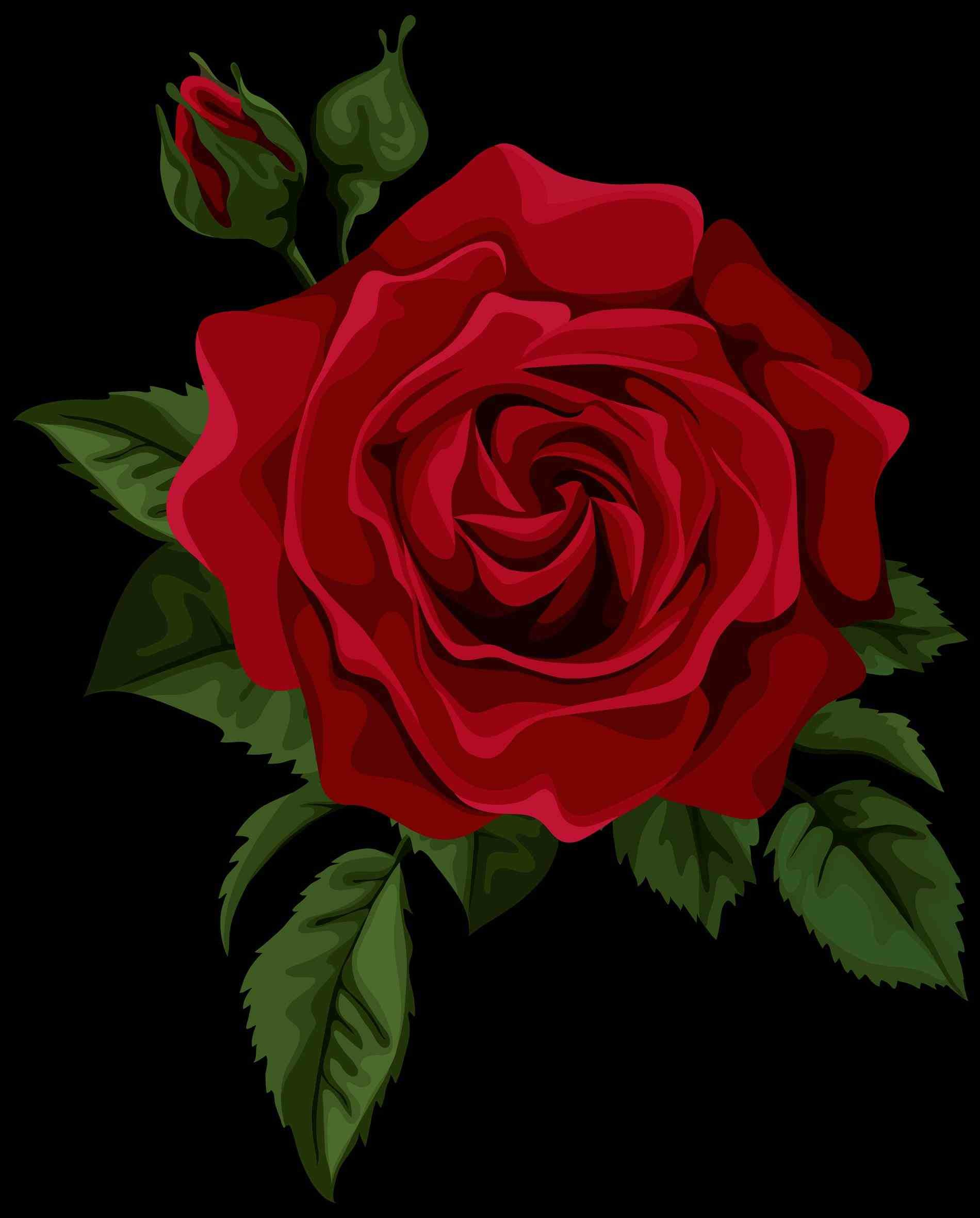 Red Rose Background Tumblr Posted By Zoey Simpson