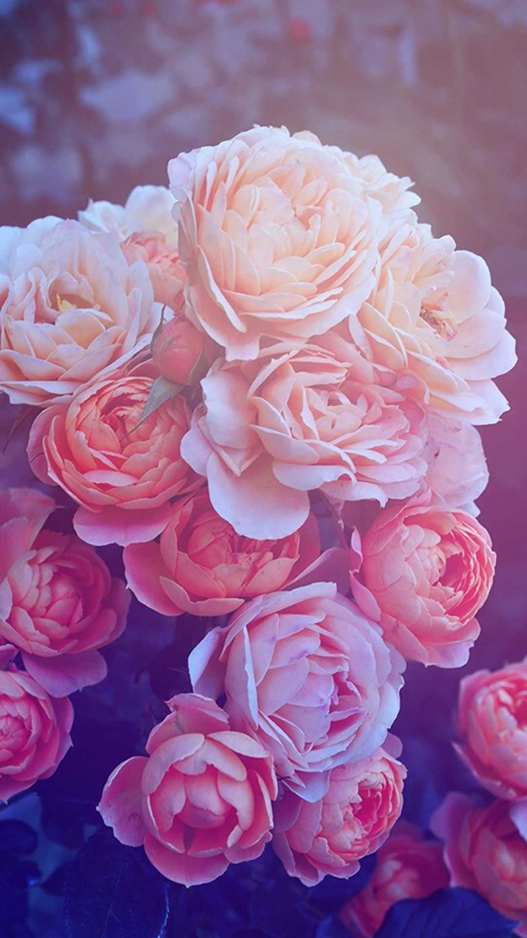 Rose Gold Iphone Wallpaper Posted By Michelle Walker