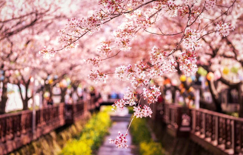 Sakura Wallpapers Posted By Sarah Thompson
