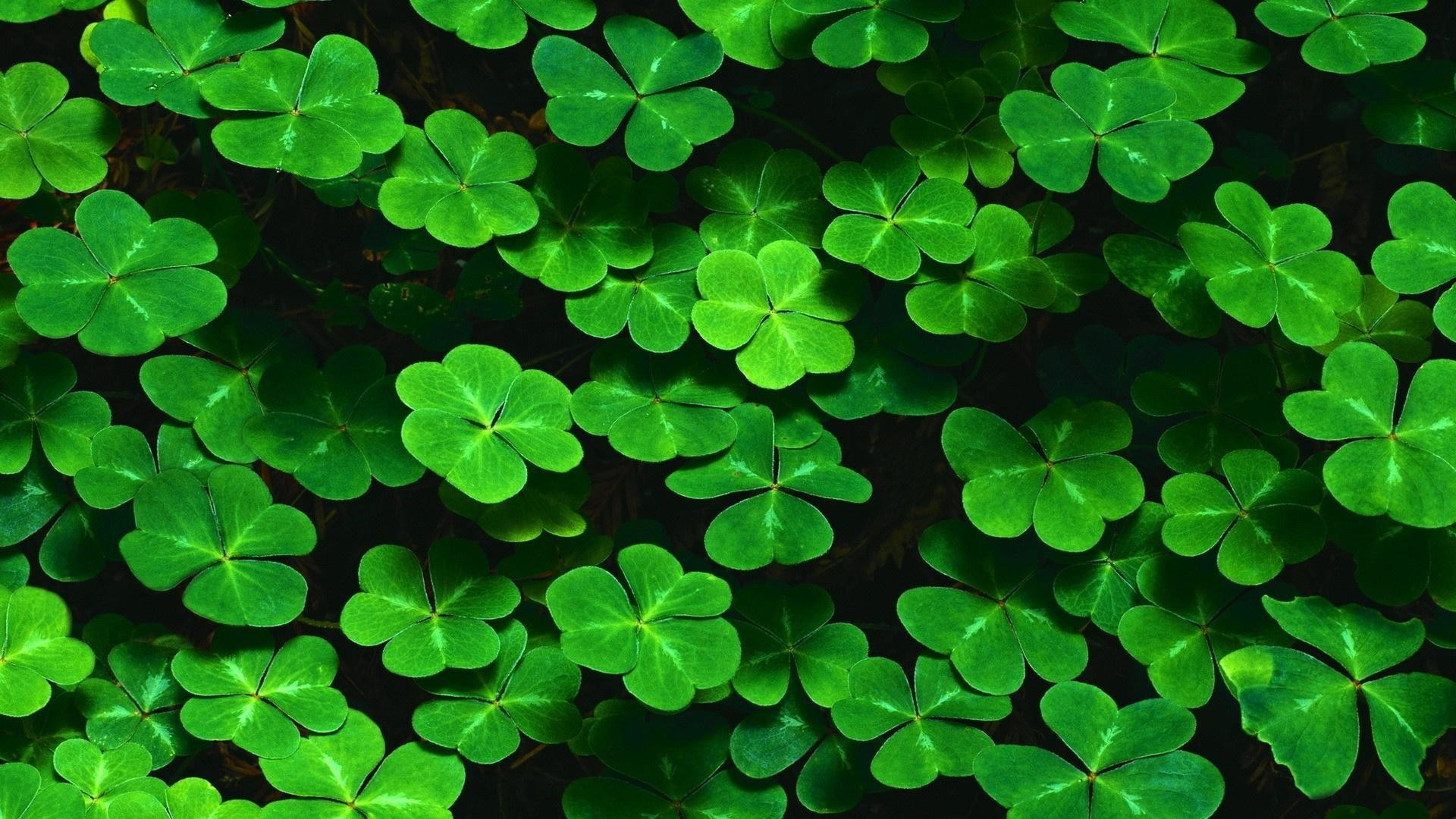 Shamrock Wallpaper For Iphone Posted By Michelle Walker