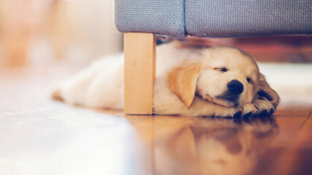 Sleeping Dog Wallpaper Posted By Sarah Mercado