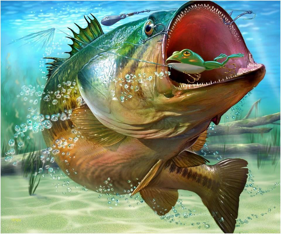 Smallmouth Bass Wallpaper Posted By Ryan Mercado