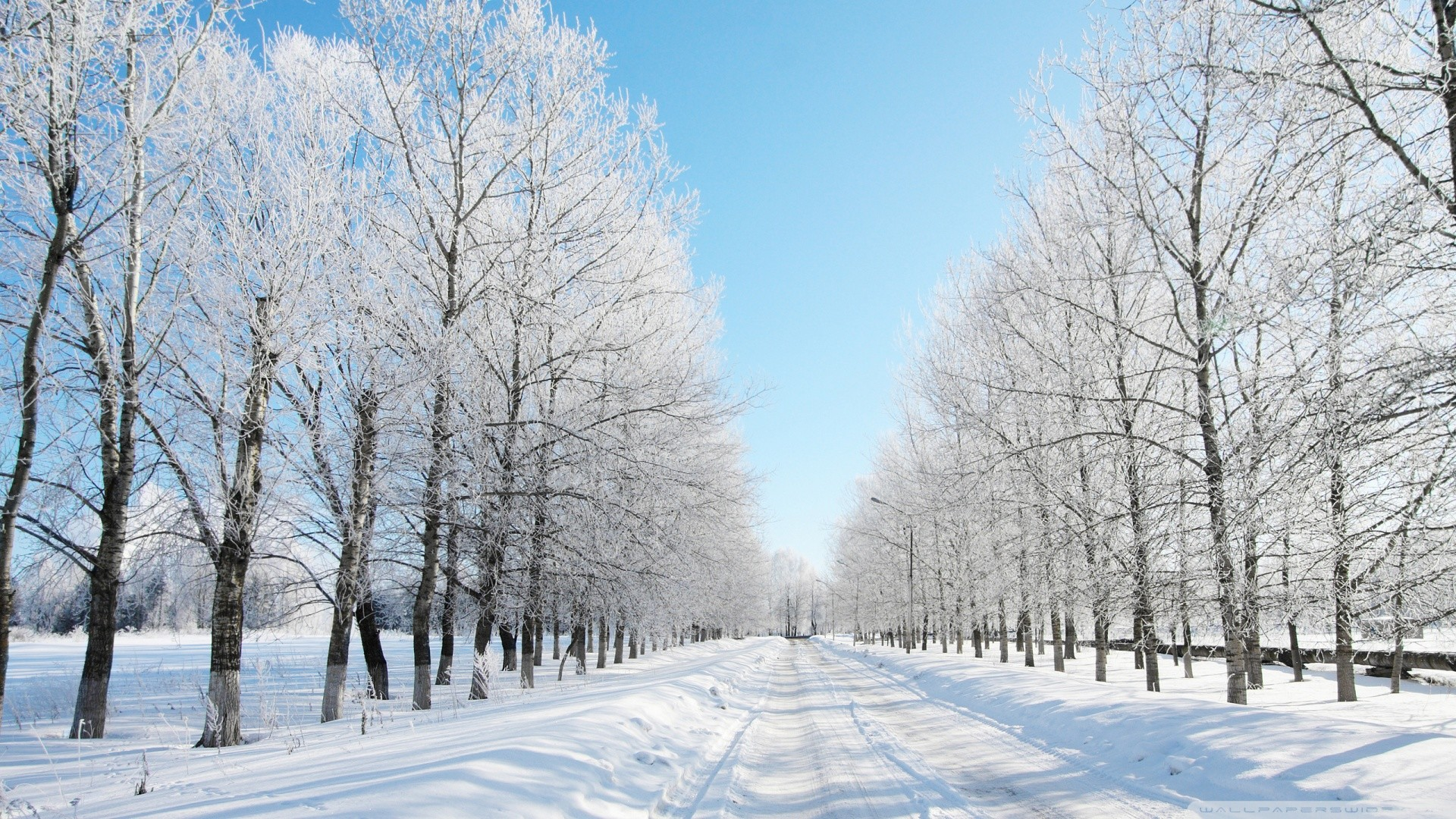 Live Snow Falling Wallpaper 54+ images