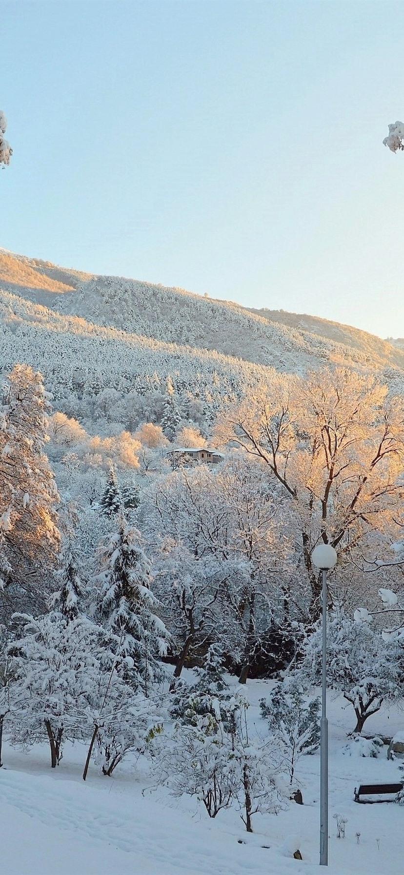 Winter, snow, trees, park 828x1792 iPhone XR wallpaper