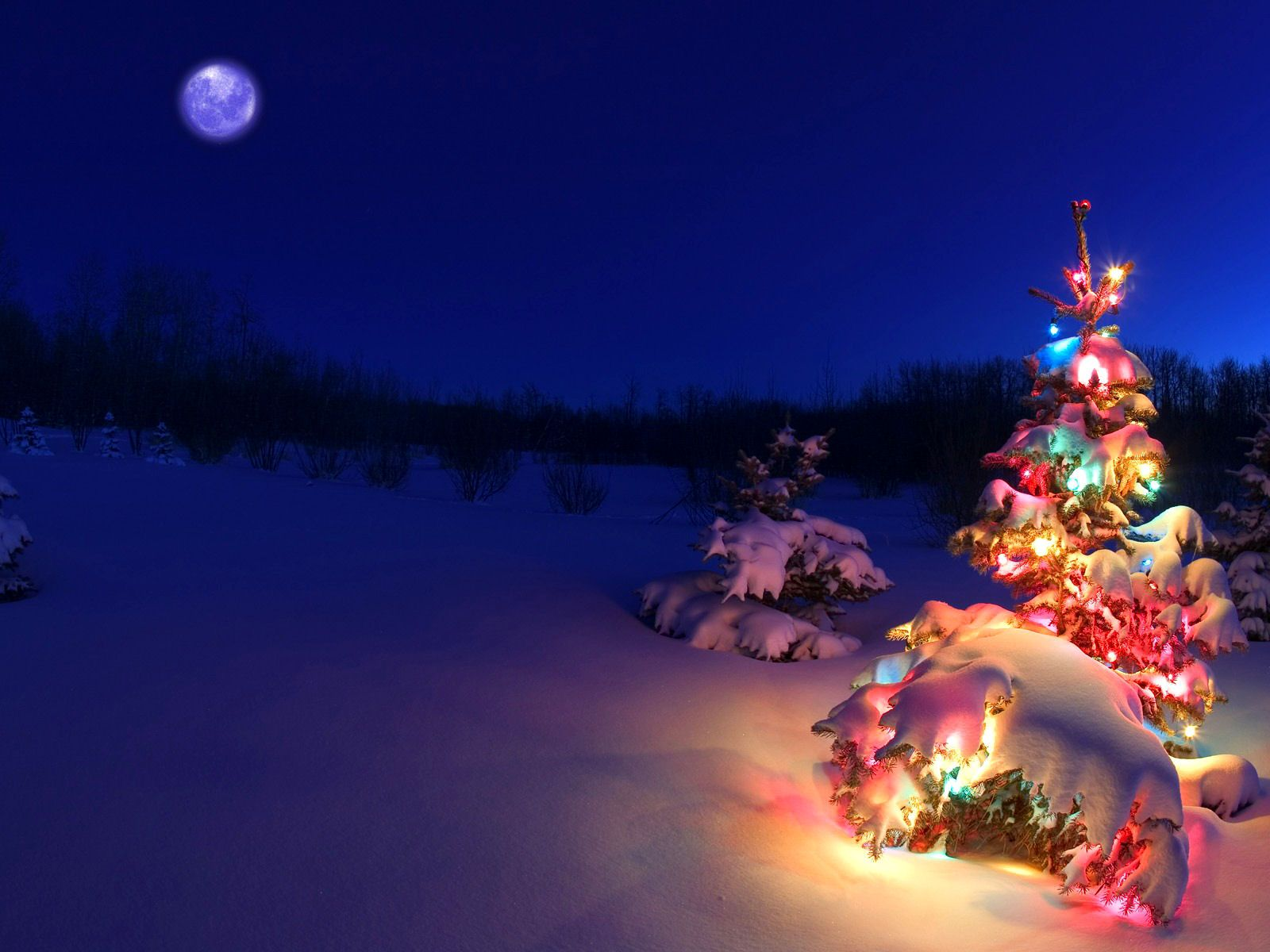 Christmas Tree Lights Snow Christmas Wallpaper Backgrounds