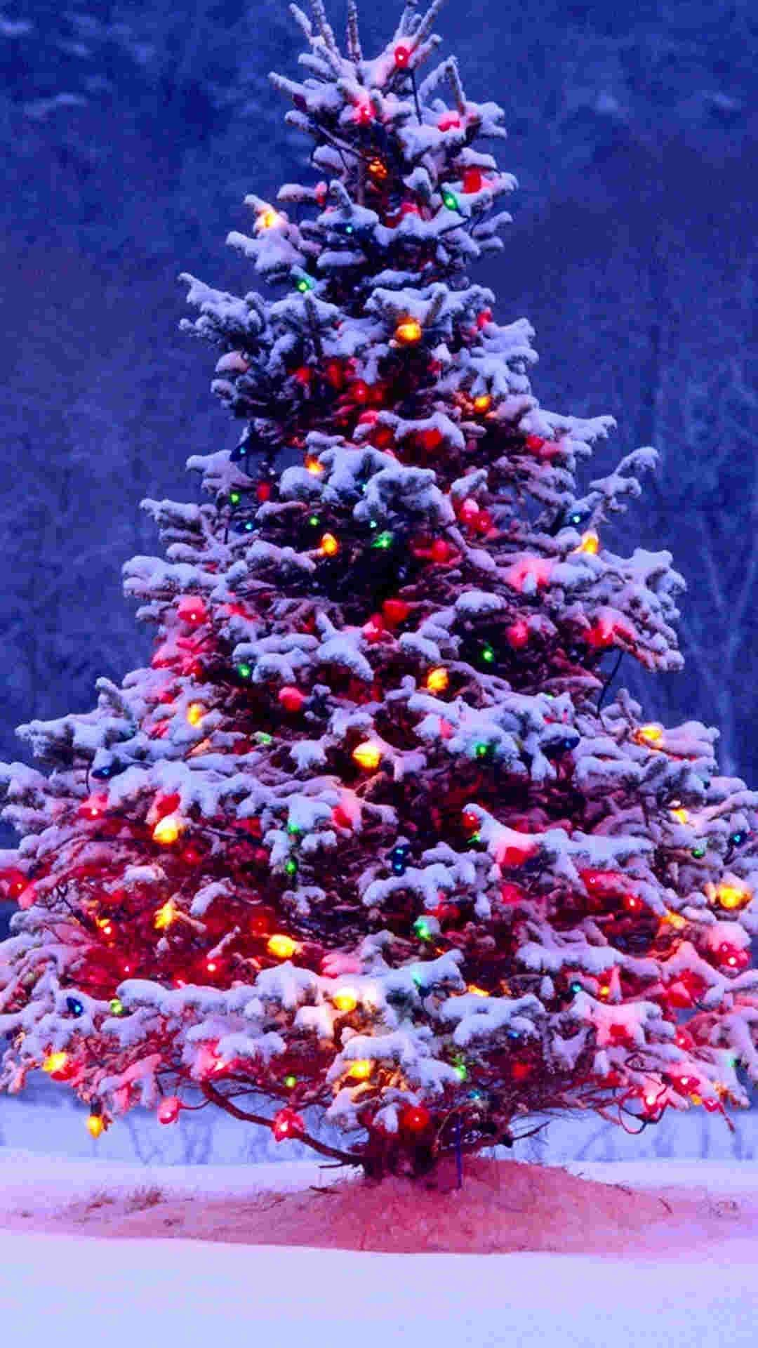 Snowy Christmas tree iPhone 6 plus wallpaper ideas for 2014