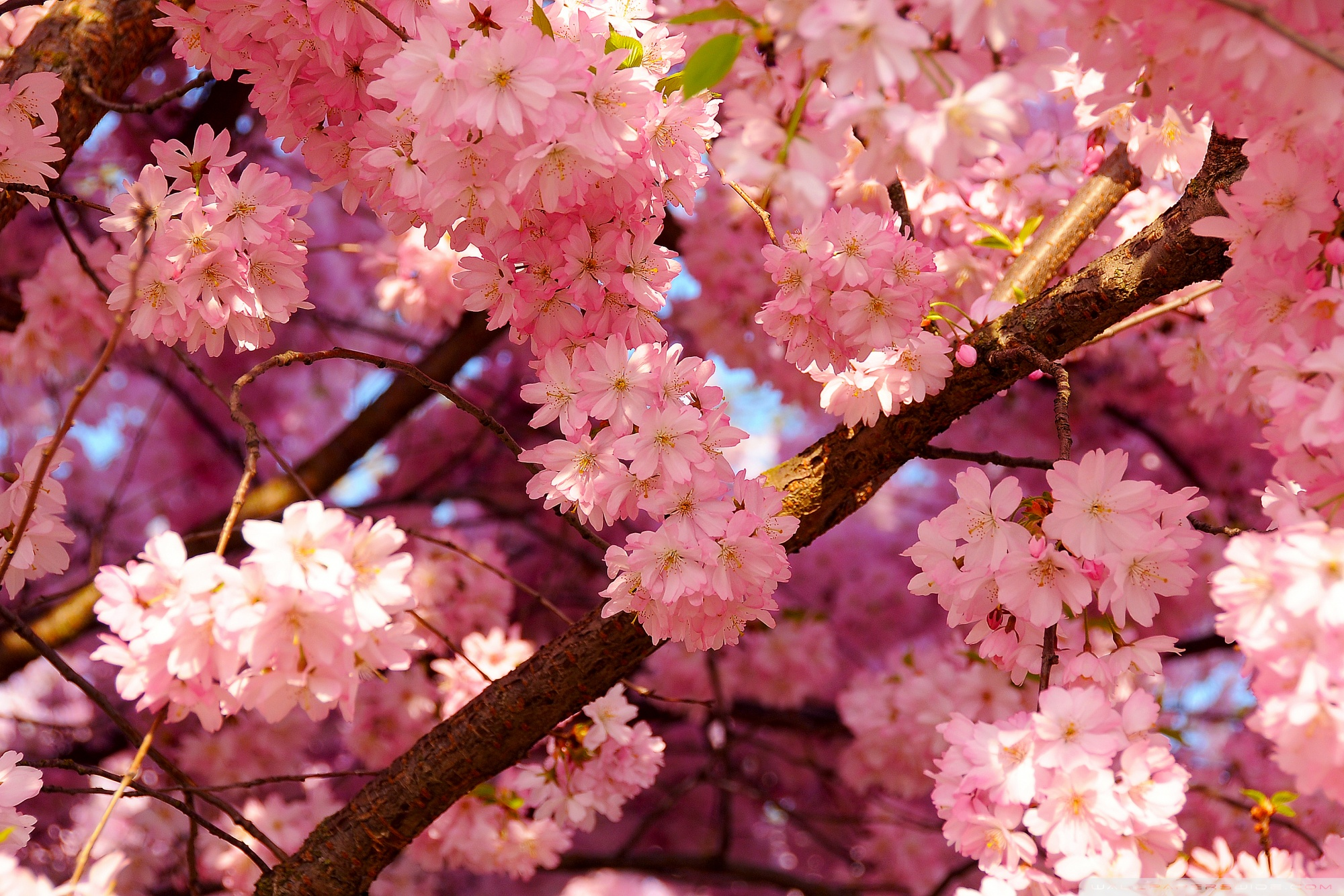 Spring Aesthetic Wallpaper Posted By Michelle Johnson