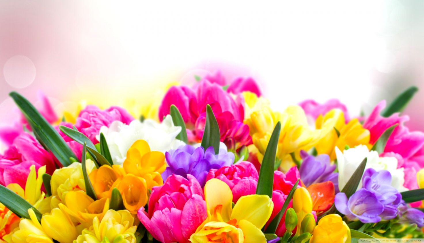 Spring Flowers Desktop Wallpaper Free Posted By John Simpson