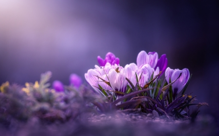Spring Flowers Wallpapers posted by Samantha Johnson