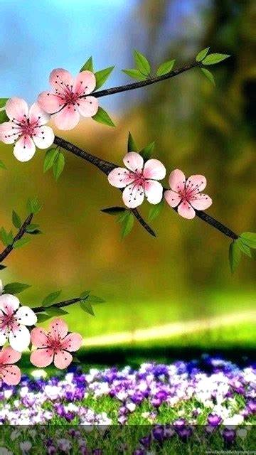 Spring Screen Wallpaper Posted By Ryan Johnson