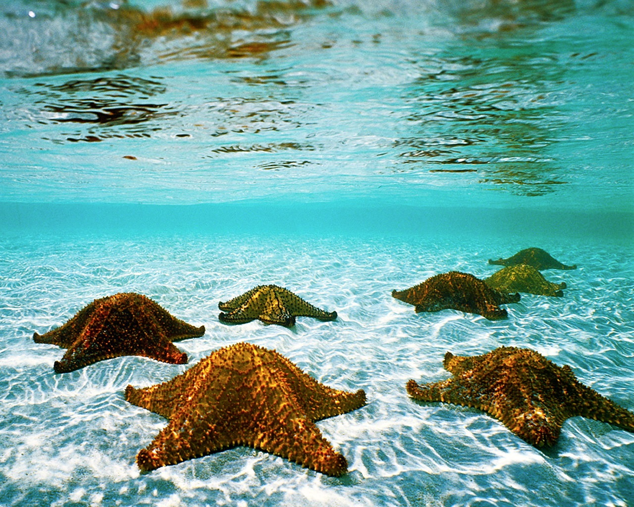 Starfish Wallpapers Posted By Christopher Thompson