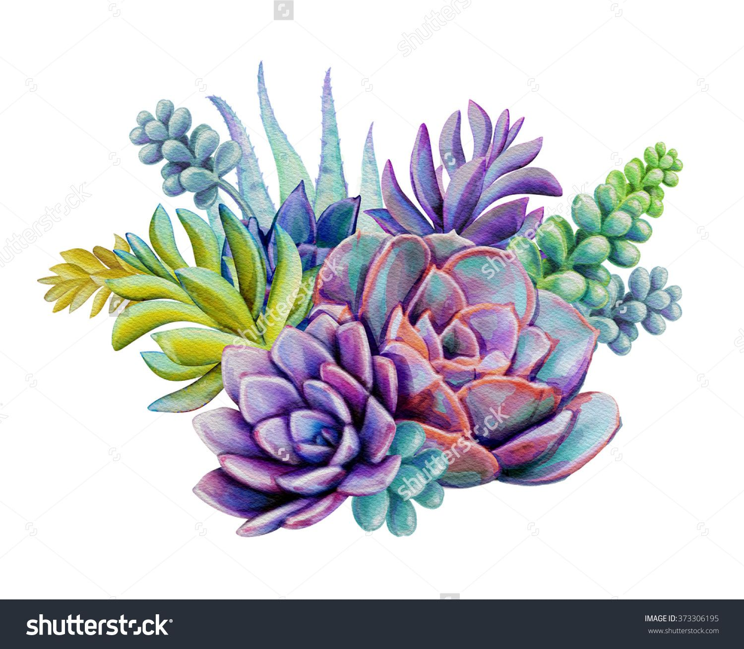 Succulent Backgrounds Posted By Ethan Thompson
