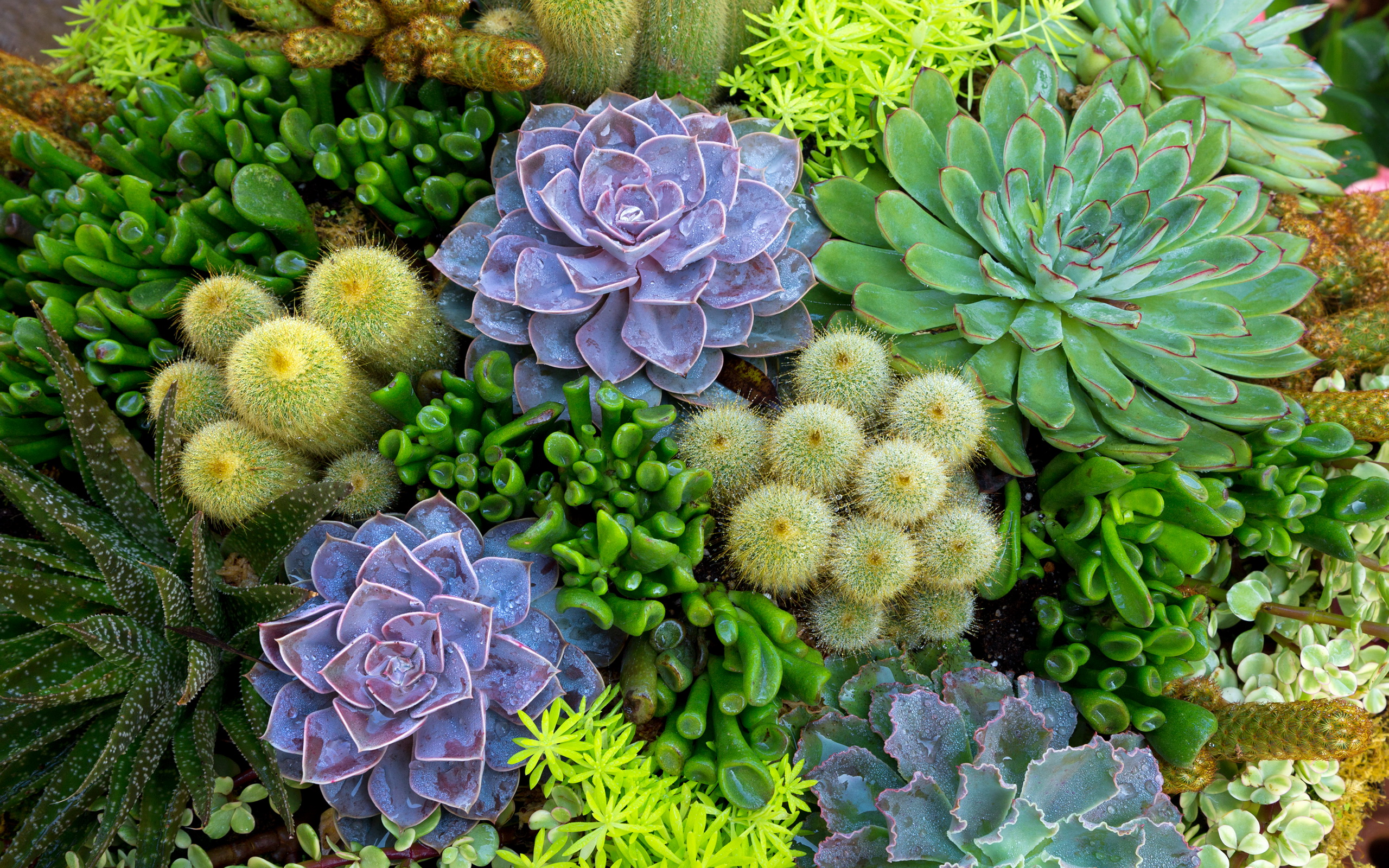 Succulent Computer Background Posted By Samantha Anderson