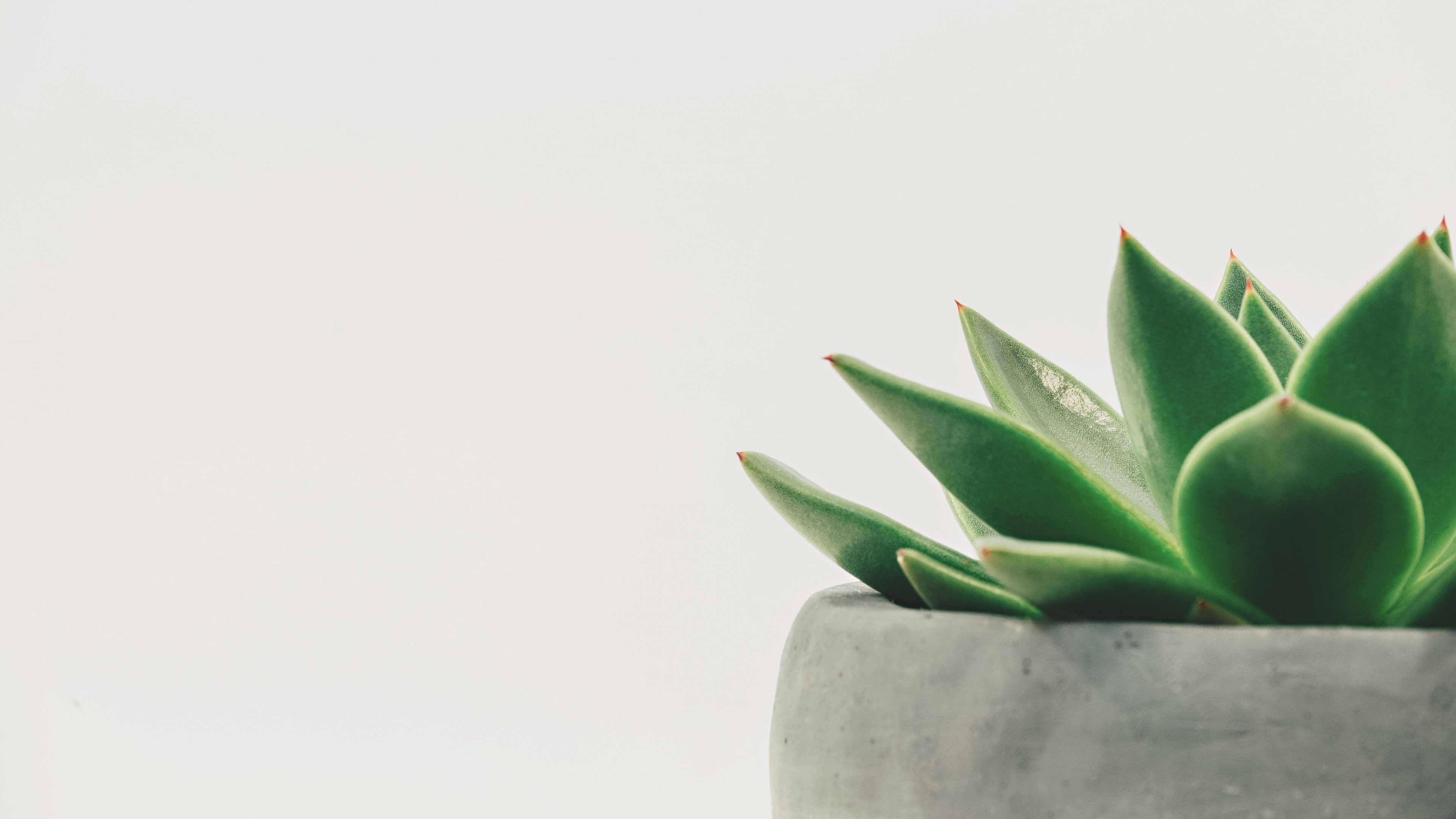 Succulent Desktop Backgrounds Posted By Zoey Mercado