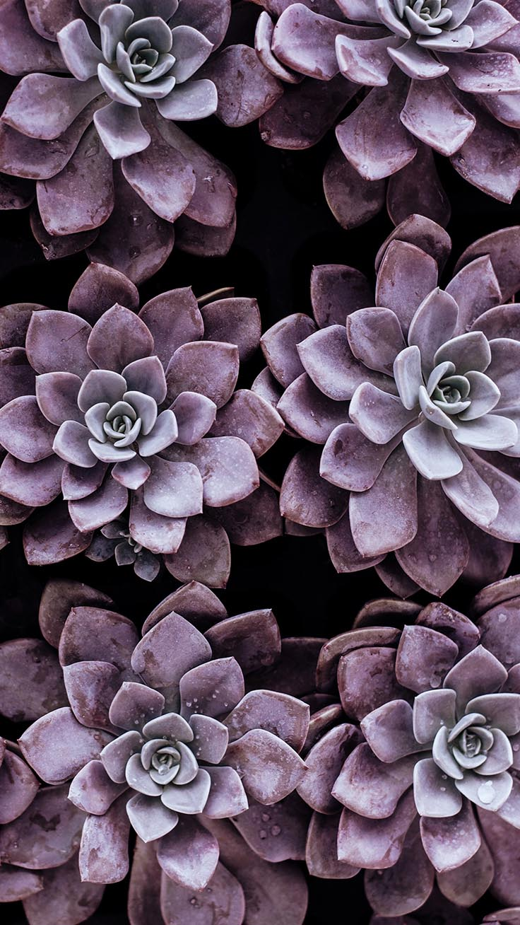 Succulent Screensaver Posted By Christopher Tremblay