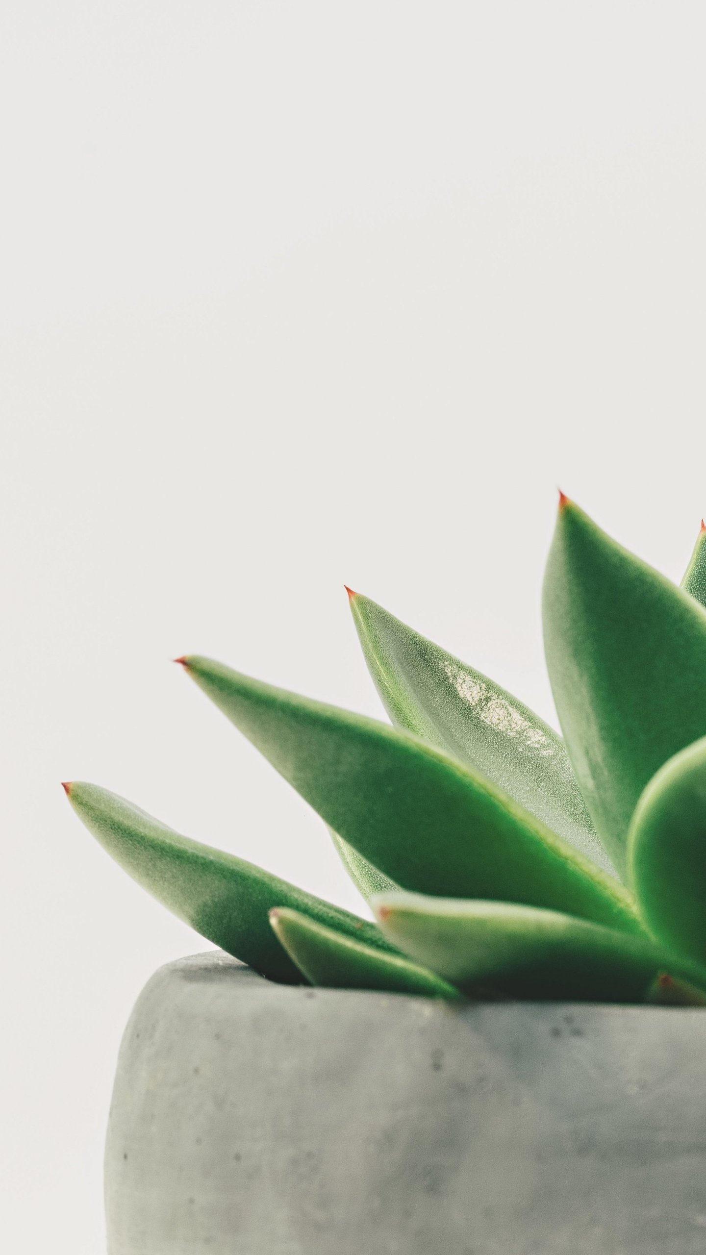 Succulent Wallpapers Posted By Zoey Simpson