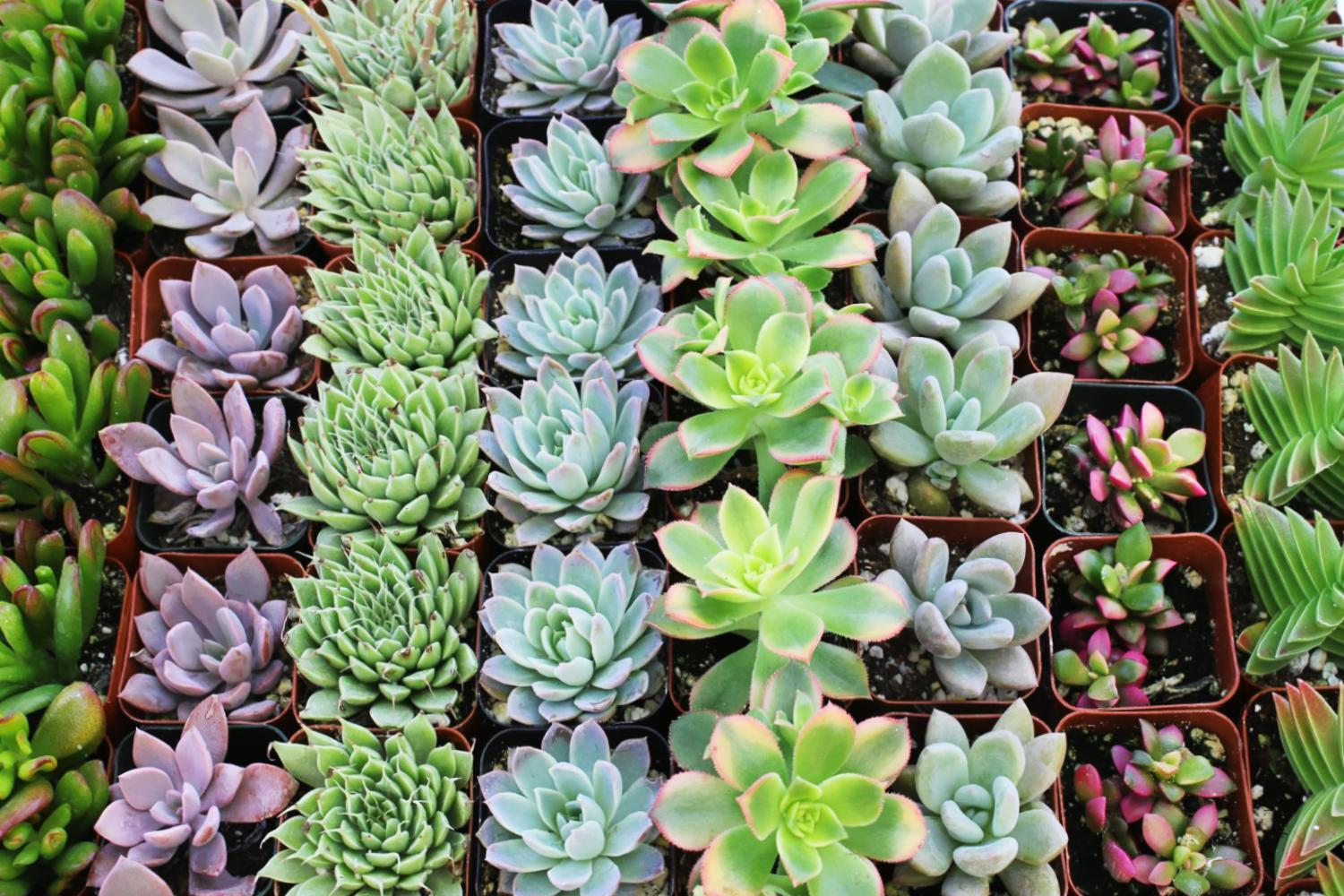 Succulents Wallpaper Posted By Christopher Sellers