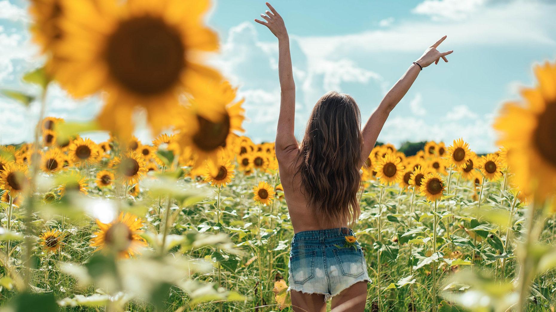 Sunflower Desktop Wallpaper Posted By Ryan Peltier