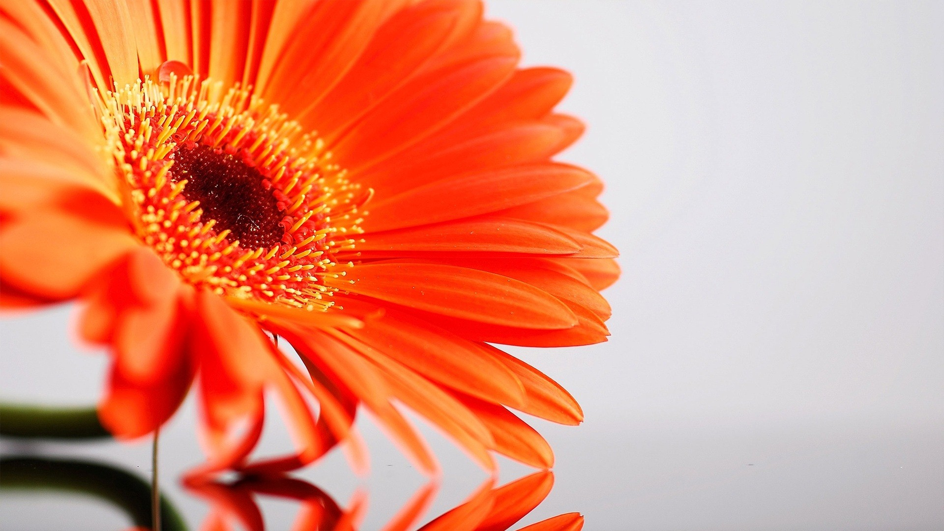 Amazing Sunflower HD Desktop Background Wallpapers for