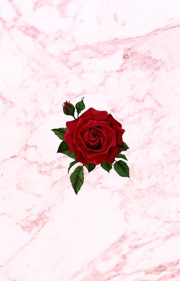 Supreme Rose Wallpapers Posted By Michelle Tremblay