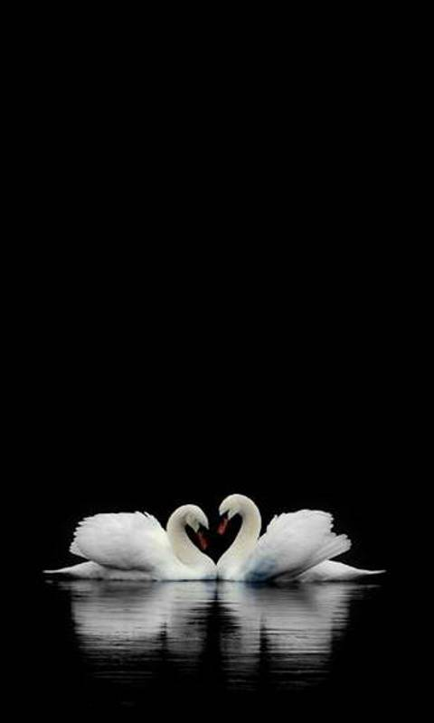 swan wall paper