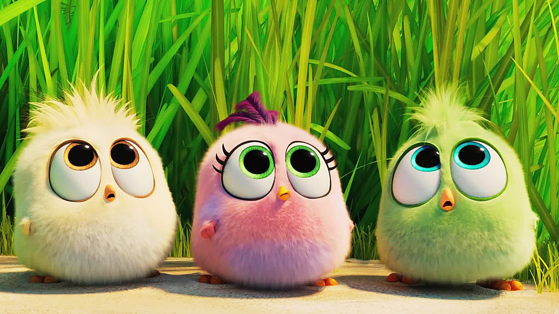 The Angry Birds Movie Wallpapers Posted By Ethan Thompson