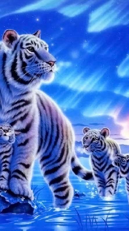 Tiger Desktop Wallpaper Wallpapers Browse