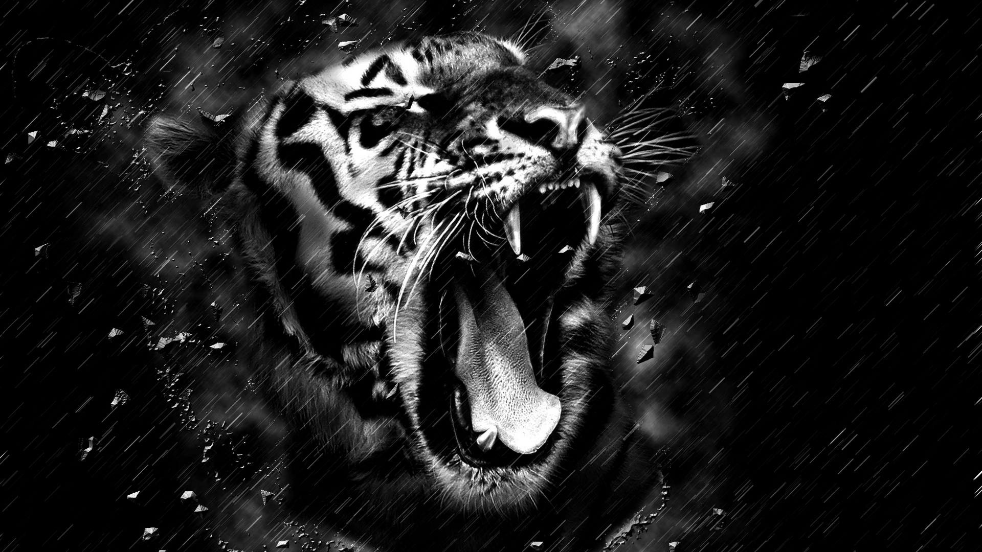 Tiger Hd Wallpapers 1920x1080 Posted By Ryan Sellers