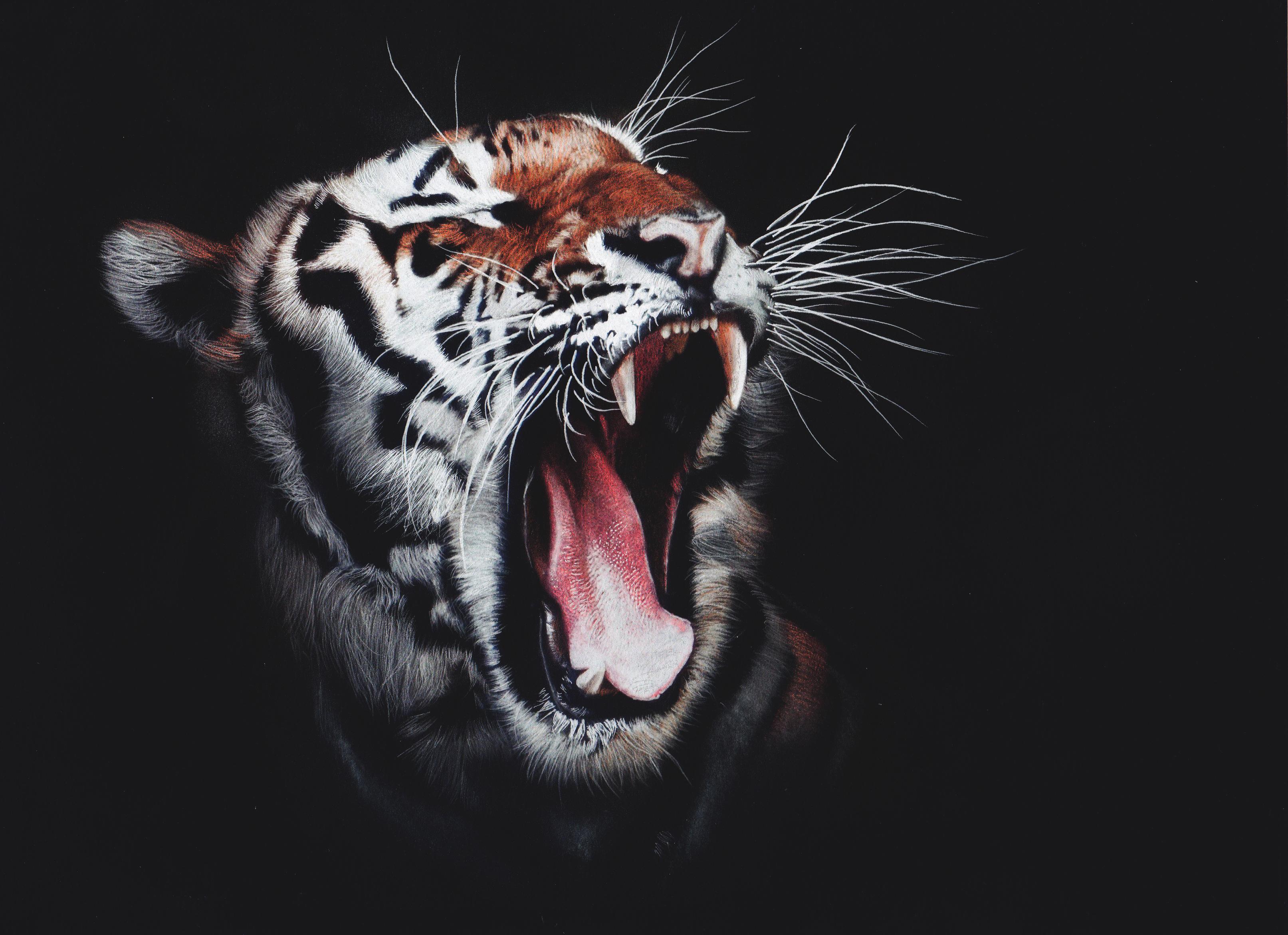 Black Tiger Hd Wallpaper For Mobile