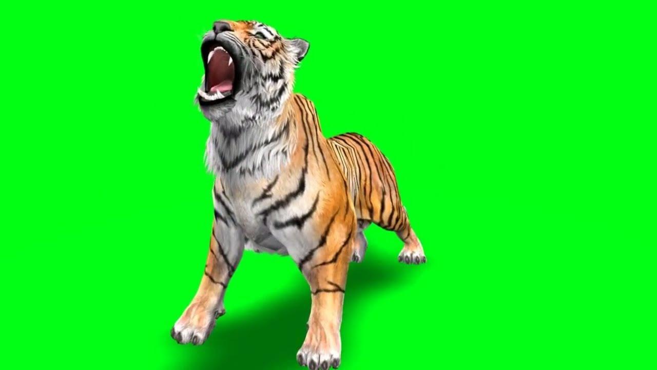 15 Green Screen Animals Ideas Greenscreen 15