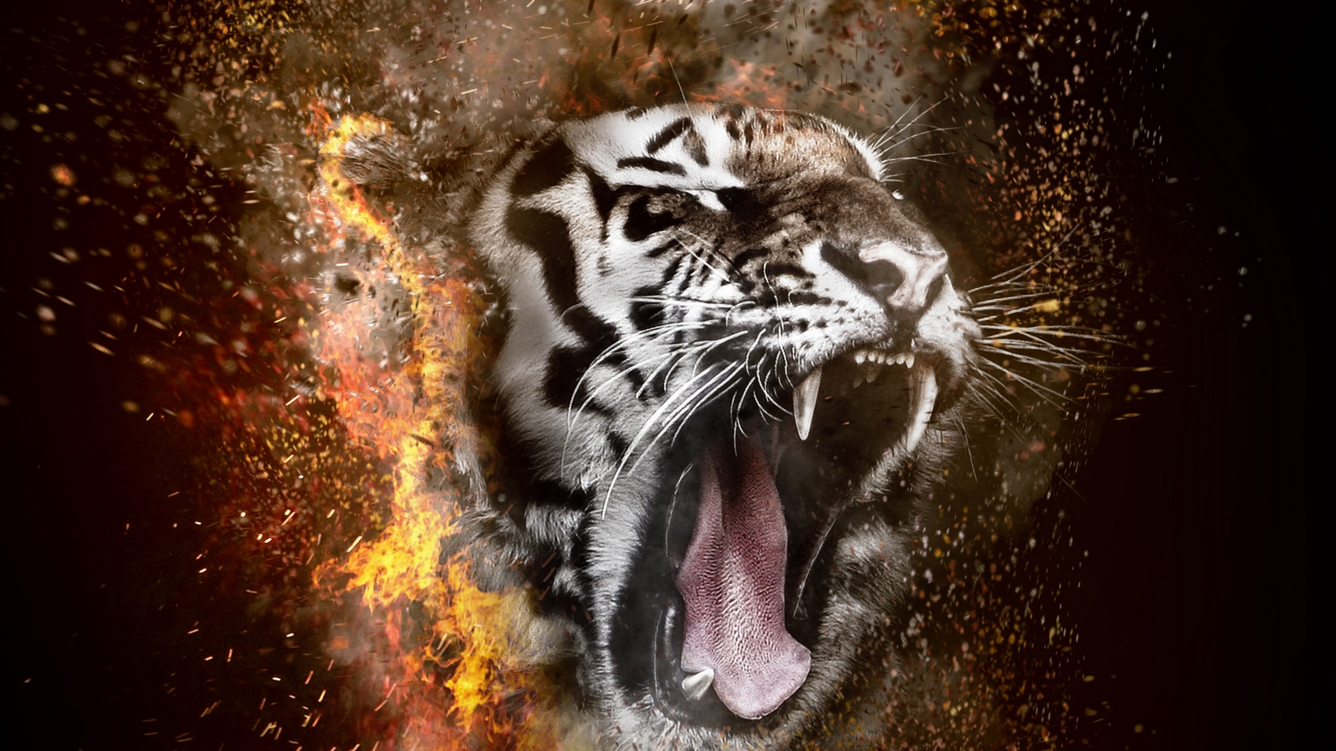 Tiger Wallpaper Hd 1080p Posted By Ethan Tremblay